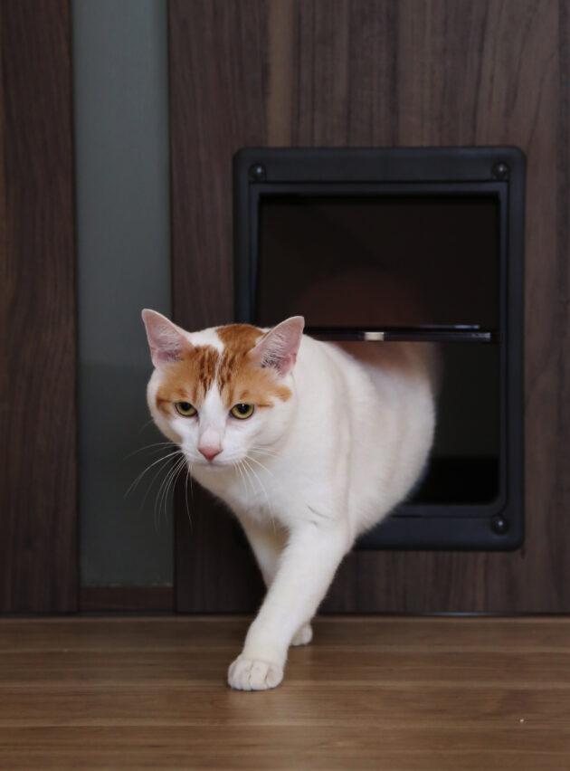 猫ドアくぐりぬけてます